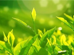 茶知识大全—15个问题了解清楚最全的茶叶发展史